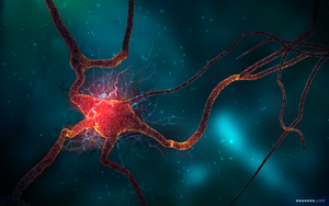 Neuron Spike Train by neutrix