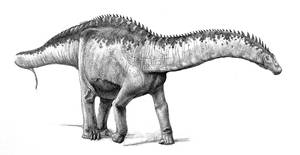 Apatosaurus by pheaston
