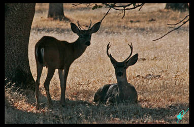 TWO DEER by Marvin-T