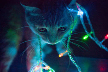 meow. by NicoleSabella