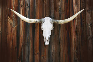 Cow Skull on Wood by Xen66