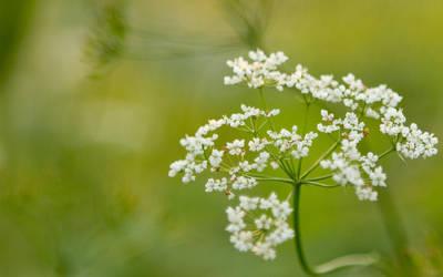 Flower by chr85