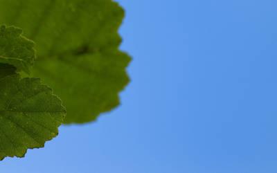 Leaf by chr85