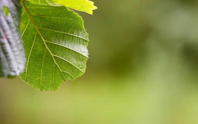 Leaf 2 by chr85
