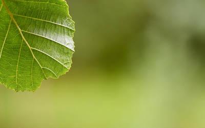 Leaf 3 by chr85