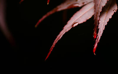Reddish by chr85