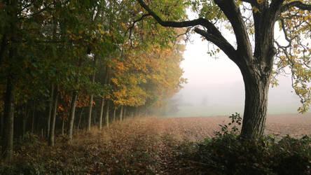 Fog forest iii by bigies