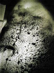 stomach by kirushi