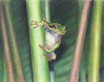 Frog by Andreiuska