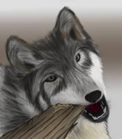 Wolf Study by Nekot-The-Brave
