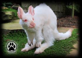 Achromia the albino kangaroo poseable art doll! by CreaturesofNat