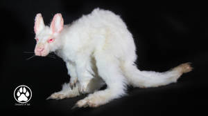 Achromia the albino kangaroo poseable art doll! by CreaturesofNat
