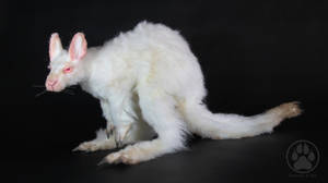 SOLD Achromia the albino kangaroo art doll! by CreaturesofNat