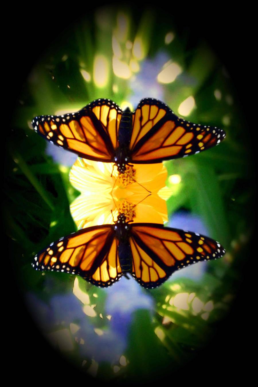 monarchs by KenshinKyo