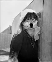 A Werewolfs among us by Fenrirsha