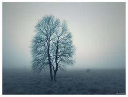 Standing in the mist by caithness155