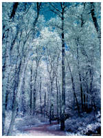 Cloudy trees IR by caithness155