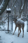 This is a Big Buck in the yard by FireBoar