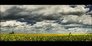 The sunflower ridge by realityDream
