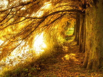 Morning gold IV. by realityDream