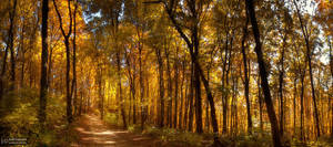 Golden forest II. by realityDream