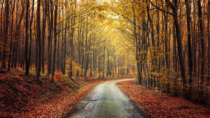 Autumn Journey pt.XIV. by realityDream