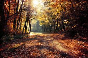 Autumn Walk XXIX. by realityDream