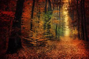 Autumn Walk XXXIV. by realityDream