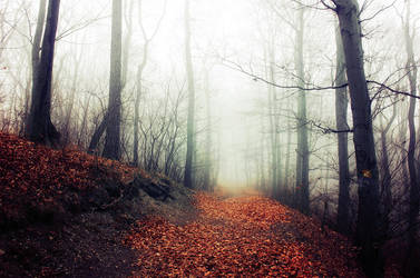 If These Trees Could Talk XXI. by realityDream