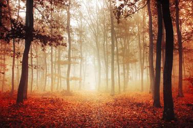 Autumn Walk LIII. by realityDream