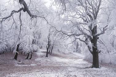 Winter Wonderland IV. by realityDream