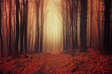 Autumn Wonder I. by realityDream