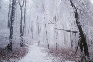 Winter Wonderland VI. by realityDream