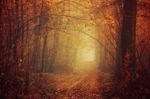 Autumn Serenade by realityDream