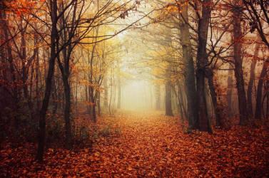 Autumn Walk LX. by realityDream