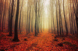 Autumn Walk LVI. by realityDream