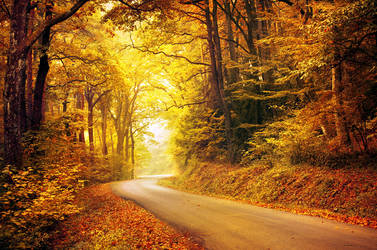 Autumn Journey XXV. by realityDream