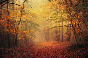 Autumn Walk LXVI. by realityDream