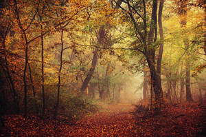 Autumn Walk LXVII. by realityDream