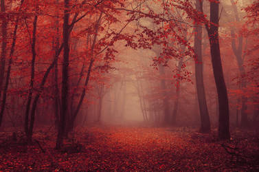 Red Forest VI. by realityDream