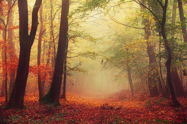 Colorful October by realityDream
