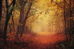 Autumn Walk LXV. by realityDream