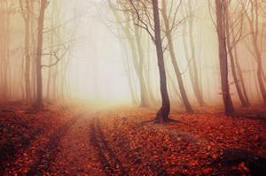 Autumn Walk LVII. by realityDream