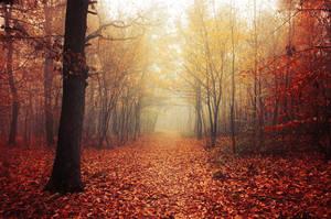 Autumn Walk L. by realityDream