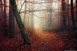 Fading Autumn VI. by realityDream