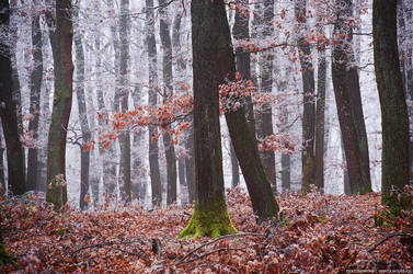 Winter Woods XVI. by realityDream