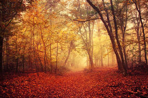 Autumn Walk LXIX. by realityDream
