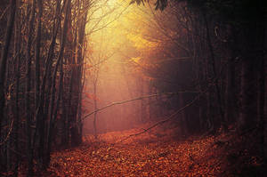 Fading Autumn IX. by realityDream