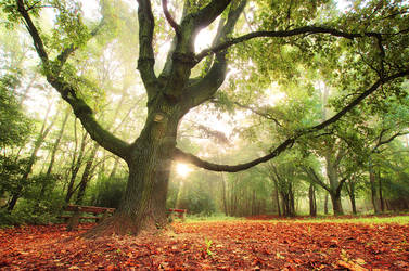 Early Autumn I. by realityDream