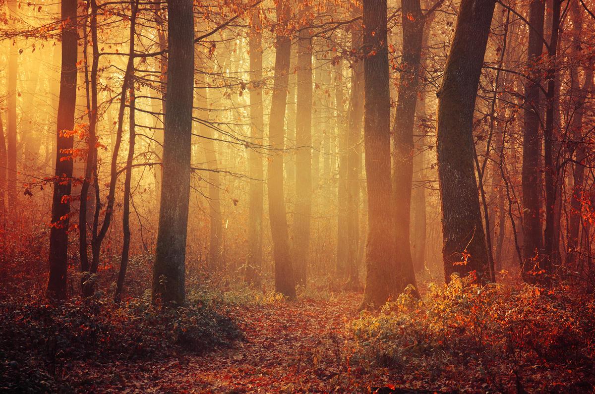 Fading Autumn III. by realityDream